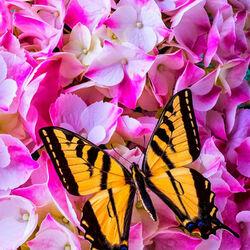 Пазл онлайн: Желтая бабочка