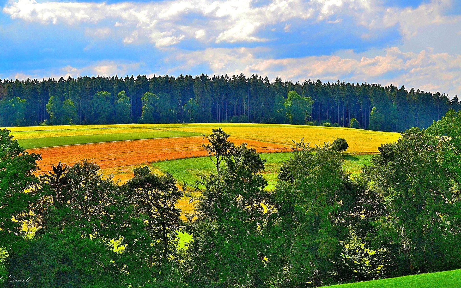 этот раз открытки с полем и лесом некоторого размышления