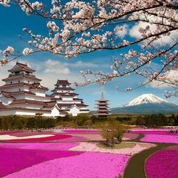 Пазл онлайн: Цветение сакуры и шиба-закуры