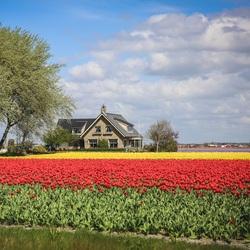 Пазл онлайн: Дом на цветочном поле