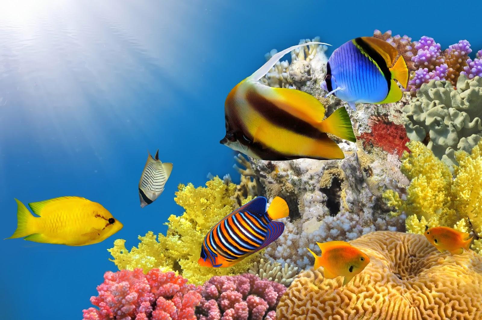 Пазл Морские обитатели — собрать пазл онлайн