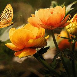 Пазл онлайн: В оранжевых тонах