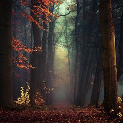 Пазл онлайн: Туманная осень