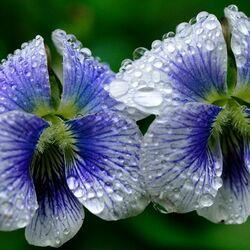 Пазл онлайн: Цветочный блюз