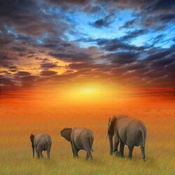 Пазл онлайн: Слоны в лучах заката