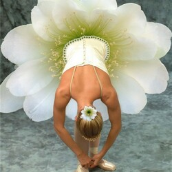 Пазл онлайн: Балет цветов