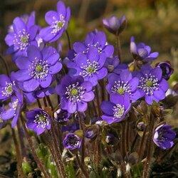 Пазл онлайн: Красота цветов