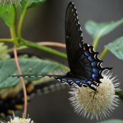 Пазл онлайн: А бабочка крылышками