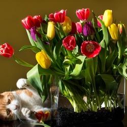 Пазл онлайн: Цветы и кошка
