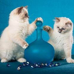 Пазл онлайн: Котята