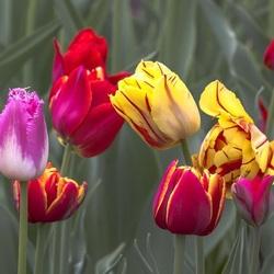 Пазл онлайн: Разноцветики