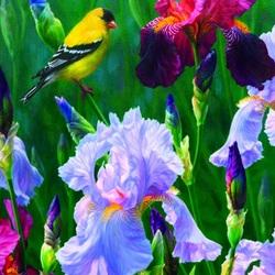 Пазл онлайн: Птичка и ирисы