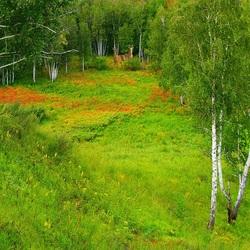 Пазл онлайн: Заповедные зеленые лужайки