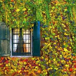 Пазл онлайн: Осень у окошка