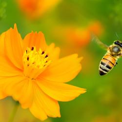 Пазл онлайн: Пчёлка