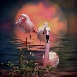 Пазл онлайн: Розовые фламинго