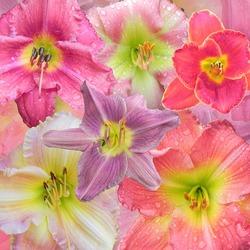 Пазл онлайн: Цветы гладиолуса
