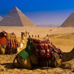 Пазл онлайн: Верблюды в пустыне