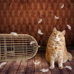 Пазл онлайн: Птичка улетела