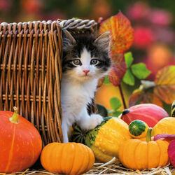 Пазл онлайн: Осенью в саду