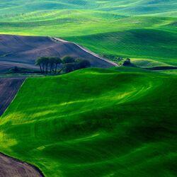 Пазл онлайн: Бархатное поле
