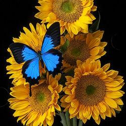 Пазл онлайн: Бабочка и подсолнухи