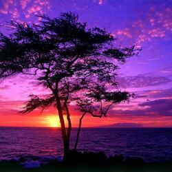 Пазл онлайн: Дерево