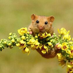 Пазл онлайн: Цветочек
