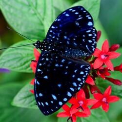 Пазл онлайн: Мир бабочек