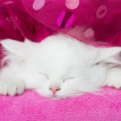 Пазл онлайн: Спящий котенок