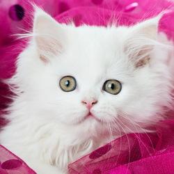 Пазл онлайн: Котенок