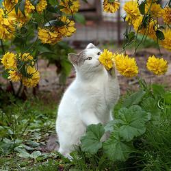 Пазл онлайн: Запах лета