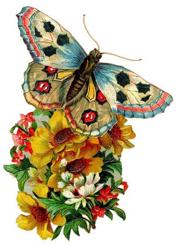 Анимация картинки бабочки цветы