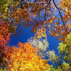 Пазл онлайн: Осенний вальс
