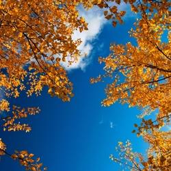 Пазл онлайн: В небе голубом