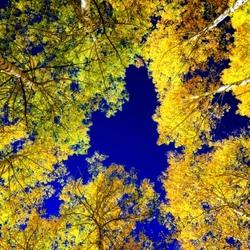 Пазл онлайн: Золотое небо