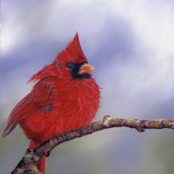 Пазл онлайн: Птица-кардинал
