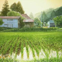 Пазл онлайн: Рисовое поле