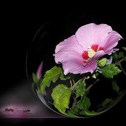 Пазл онлайн: Красота цветка