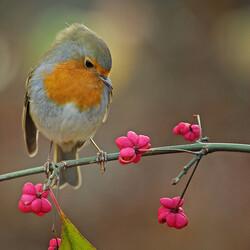 Пазл онлайн: Птичка-невеличка