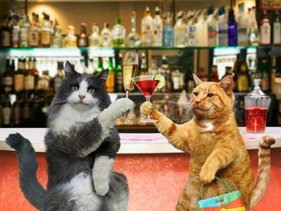 Happy birthday animated gif cat
