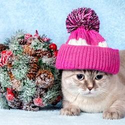 Пазл онлайн: Котик в шапочке