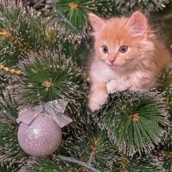 Пазл онлайн: Котеночек, елочка и шарик