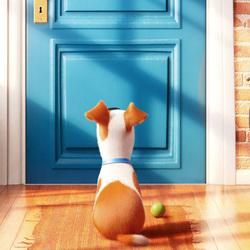 Пазл онлайн: Тайная жизнь домашних животных