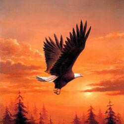Пазл онлайн: Орел в полете