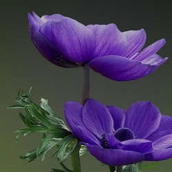 Пазл онлайн: Пленительная красота цветов
