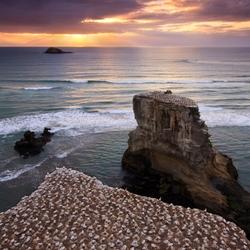 Пазл онлайн: Гнездовище чаек на скалах