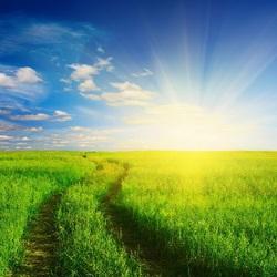 Пазл онлайн: Летнее солнце