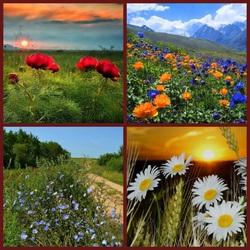Пазл онлайн: Пейзажи с дикими цветиками