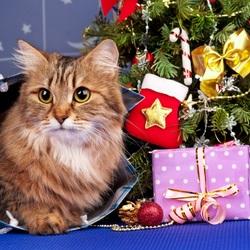 Пазл онлайн: Кот в Новый год